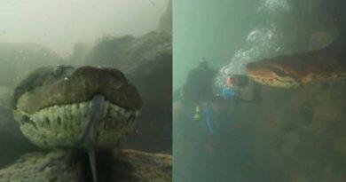 В Бразилии дайверы встретили под водой гигантскую анаконду (видео) Читайте подробнее: http://hub1news.com/%d0%b2-%d0%b1%d1%80%d0%b0%d0%b7%d0%b8%d0%bb%d0%b8%d0%b8-%d0%b4%d0%b0%d0%b9%d0%b2%d0%b5%d1%80%d1%8b-%d0%b2%d1%81%d1%82%d1%80%d0%b5%d1%82%d0%b8%d0%bb%d0%b8-%d0%bf%d0%be%d0%b4-%d0%b2%d0%be%d0%b4%d0%be/
