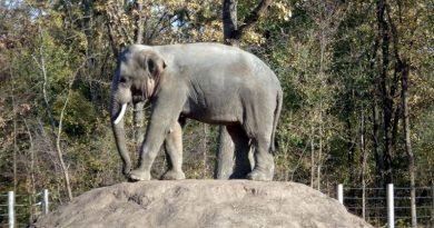 В Николаев едут два слона — они станут новыми постояльцами зоопарка. Фото. Читайте подробнее: http://hub1news.com/%d0%b2-%d0%bd%d0%b8%d0%ba%d0%be%d0%bb%d0%b0%d0%b5%d0%b2-%d0%b5%d0%b4%d1%83%d1%82-%d0%b4%d0%b2%d0%b0-%d1%81%d0%bb%d0%be%d0%bd%d0%b0-%d0%be%d0%bd%d0%b8-%d1%81%d1%82%d0%b0%d0%bd%d1%83%d1%82/