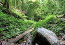 В джунглях спустя месяц нашли заблудившуюся женщину с тремя детьми