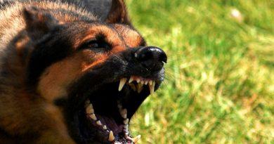 Вигул собаки та кримінальна відповідальність за нього Читайте подробнее: https://hub1news.com/%d0%b2%d0%b8%d0%b3%d1%83%d0%bb-%d1%81%d0%be%d0%b1%d0%b0%d0%ba%d0%b8-%d1%82%d0%b0-%d0%ba%d1%80%d0%b8%d0%bc%d1%96%d0%bd%d0%b0%d0%bb%d1%8c%d0%bd%d0%b0-%d0%b2%d1%96%d0%b4%d0%bf%d0%be%d0%b2%d1%96%d0%b4/