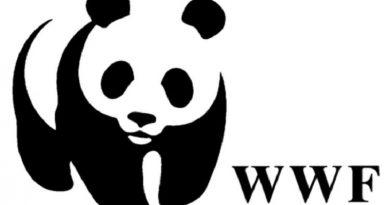 В Украине вымирают редкие виды животных, — Всемирный фонд дикой природы Читайте подробнее: https://hub1news.com/%d0%92-%d0%a3%d0%ba%d1%80%d0%b0%d0%b8%d0%bd%d0%b5-%d0%b2%d1%8b%d0%bc%d0%b8%d1%80%d0%b0%d1%8e%d1%82-%d1%80%d0%b5%d0%b4%d0%ba%d0%b8%d0%b5-%d0%b2%d0%b8%d0%b4%d1%8b-%d0%b6%d0%b8%d0%b2%d0%be%d1%82%d0%bd/