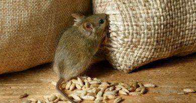 «Съели мыши»: в Госрезерве выявили недостачу зерна на 800 миллионов Читайте подробнее: https://hub1news.com/%d0%a1%d1%8a%d0%b5%d0%bb%d0%b8-%d0%bc%d1%8b%d1%88%d0%b8-%d0%b2-%d0%93%d0%be%d1%81%d1%80%d0%b5%d0%b7%d0%b5%d1%80%d0%b2%d0%b5-%d0%b2%d1%8b%d1%8f%d0%b2%d0%b8%d0%bb%d0%b8-%d0%bd%d0%b5%d0%b4/