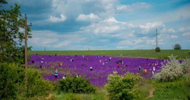 Под Одессой толпы людей рвали и вытаптывали цветы на уникальном фиолетовом поле Читайте подробнее: https://hub1news.com/%d0%9f%d0%be%d0%b4-%d0%9e%d0%b4%d0%b5%d1%81%d1%81%d0%be%d0%b9-%d1%82%d0%be%d0%bb%d0%bf%d1%8b-%d0%bb%d1%8e%d0%b4%d0%b5%d0%b9-%d1%80%d0%b2%d0%b0%d0%bb%d0%b8-%d0%b8-%d0%b2%d1%8b%d1%82%d0%b0%d0%bf%d1%82/