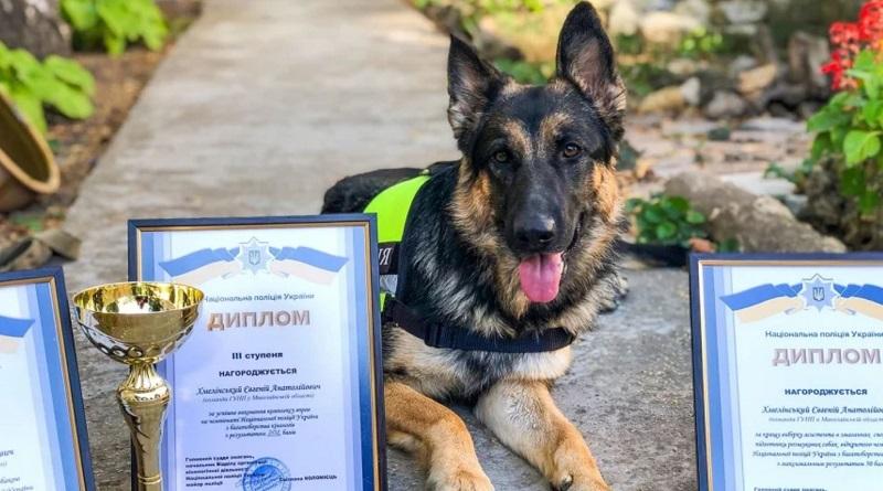 Полицейская овчарка Мэри из Николаева заняла призовое место на чемпионате Украины