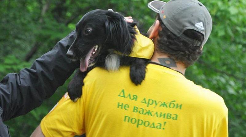 В Николаеве пройдет выставка беспородных собак, которые ищут дом
