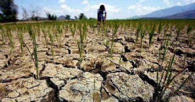 Зеленский пообещал помочь пострадавшим от засухи фермерам Николаевской области