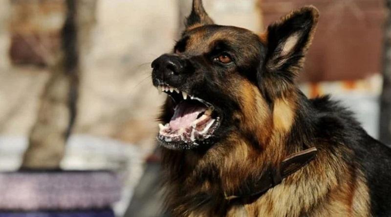 В Николаеве суд обязал горсовет заплатить 5,6 тысяч женщине, на которую напали бездомные собаки