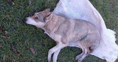 Во Львовской области, подростки запихнули собаку в мешок и жестоко избивали. ВИДЕО