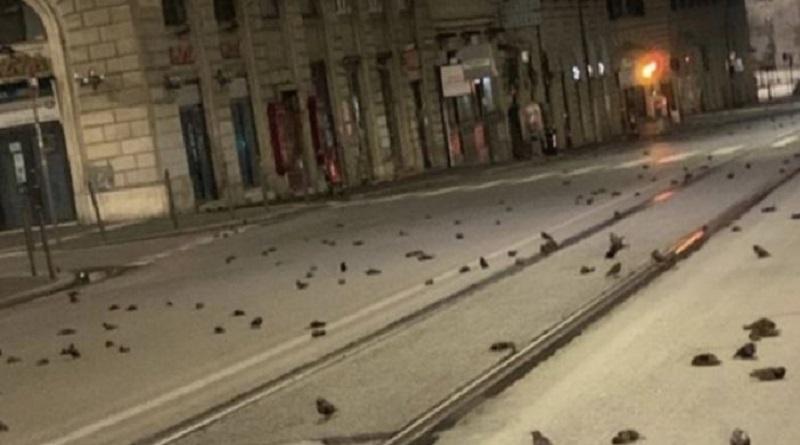 Фейерверк убил сотни птиц в Риме