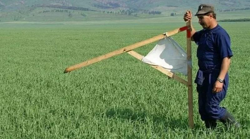 Рынок земли: почем будет гектар украинского чернозема уже в этом году