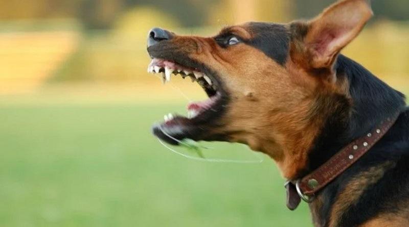 Вот почему на одних людей собака лает, а на других – нет
