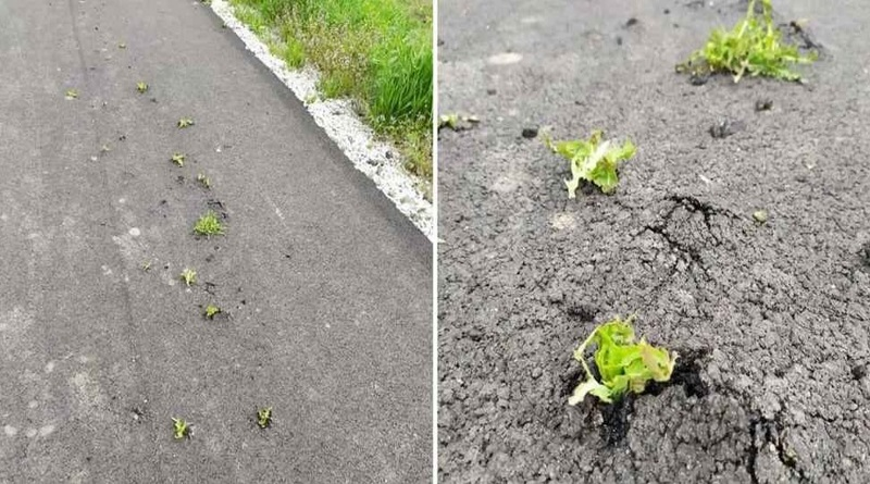 Ремонт дорог по-украински: на новой асфальтированной трассе проросла трава