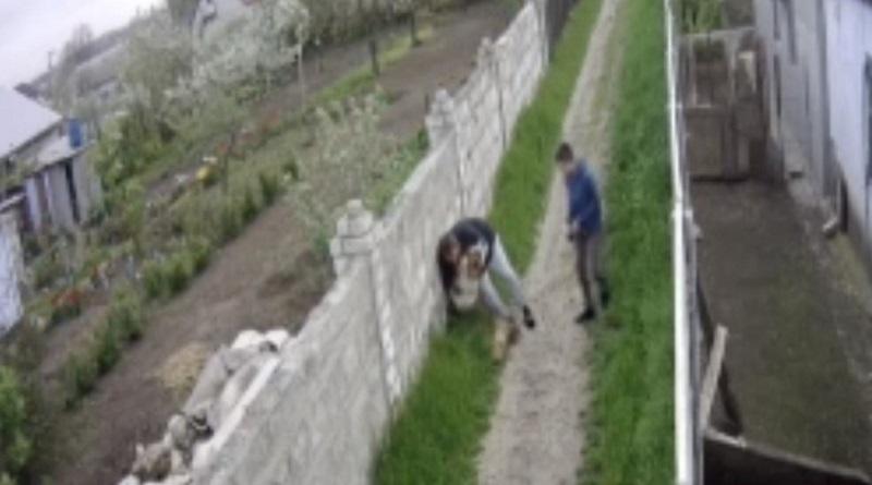 В Николаеве на глазах ребенка огромный алабай разорвал его собаку. ВИДЕО 18+