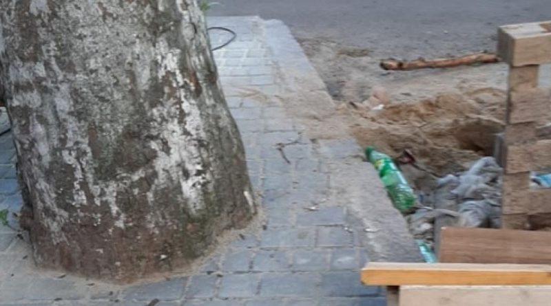 В каменном плену: в центре Николаева деревья «упаковали» плиткой