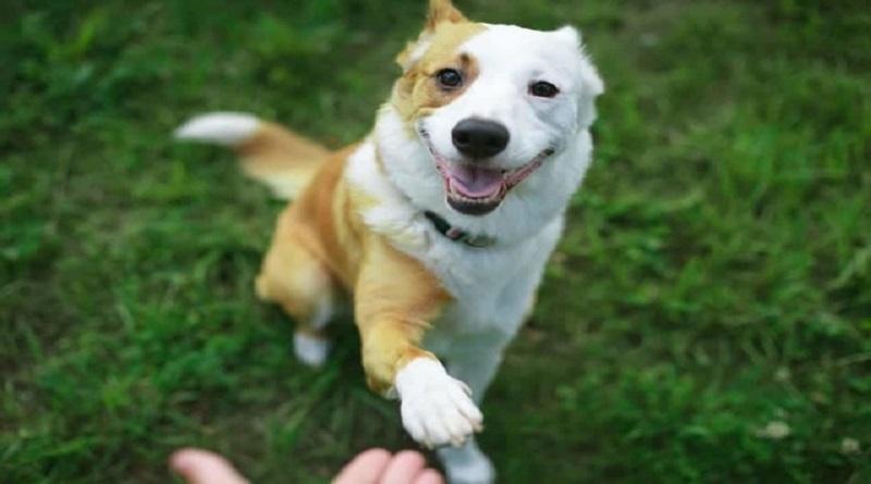 Двух мужчин засудили за обучение собаки зиговать