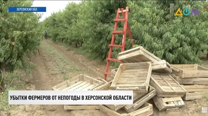 Сгнили тонны овощей: непогода уничтожает урожай на юге Украины (видео)