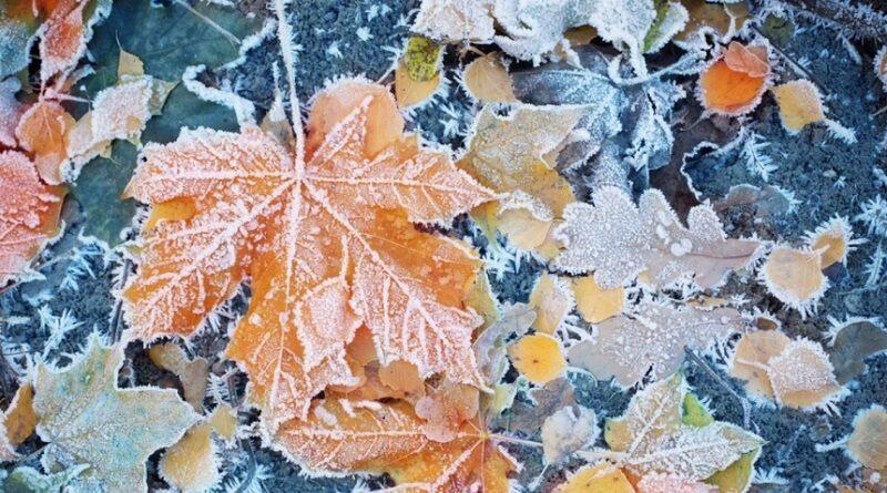 Синоптики прогнозируют заморозки в Украине уже в начале следующей недели