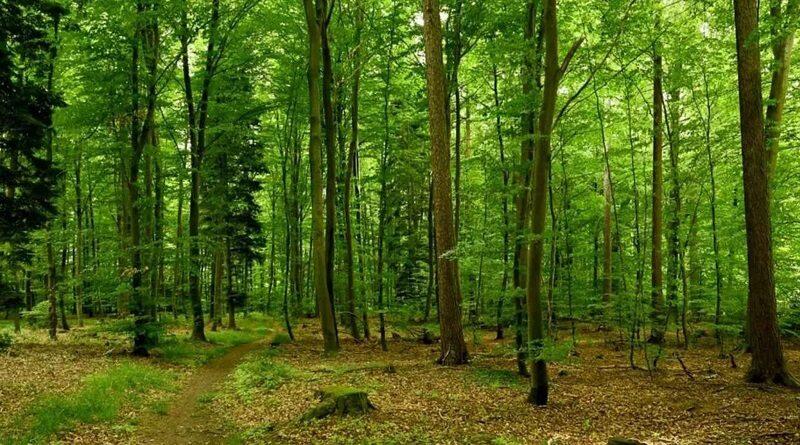 Посадка миллиарда деревьев по программе президента обойдется в два миллиарда