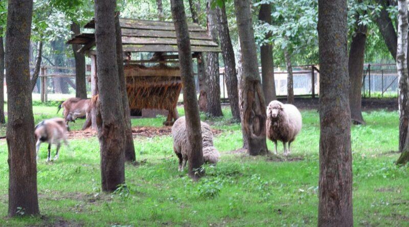 В Тернополе у животных в местном парке обнаружили сибирскую язву