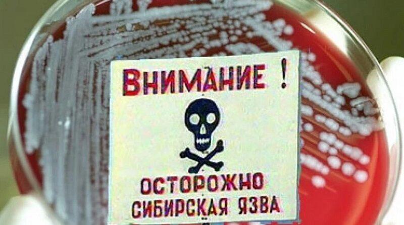 Сибирская язва обнаружена в Тернополе