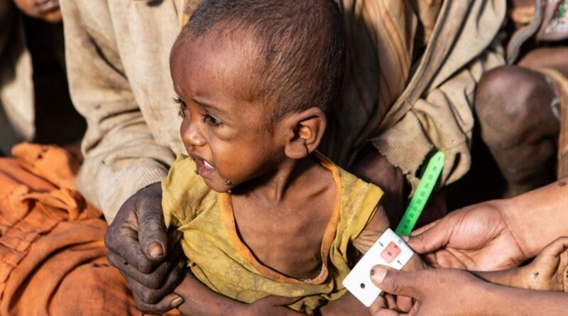 На Мадагаскар пришел голод - люди питаются саранчой