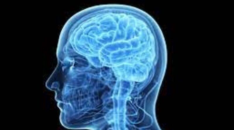 Ученые объяснили, почему у современного человека уменьшился мозг